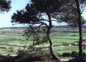bpa-depuis-colline-arbres-r-1600x1200-300x215