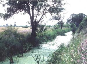 paysage-canal-matte-1600x1200-300x221
